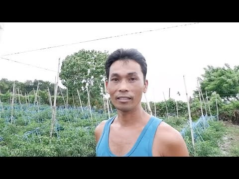 Successful Hot pepper farmer who started from zero knowledge