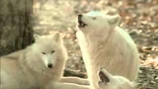 Жизнь собак (2 серия)
