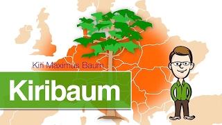 Kiribaum - Die sichere Geldanlage 2017 mit dem extrem schnell wachsenden Baum