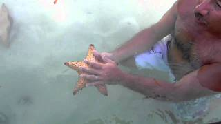 estrellas de mar explicacion ricardo tapia