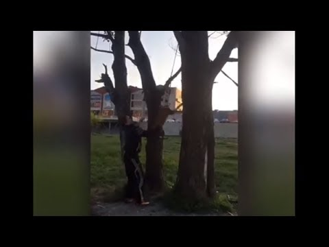 Extremely athletic doggy soars over 3 meters in the air