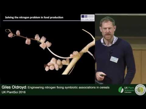 Giles Oldroyd. Engineering Nitrogen Fixing Symbiotic Associations in Cereals