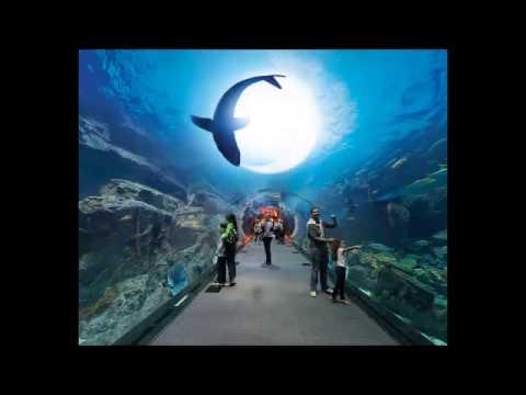 Group Travel Dubai