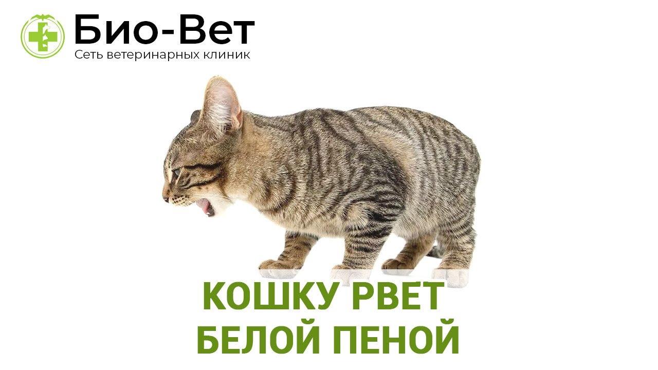 Почему кота тошнит пеной
