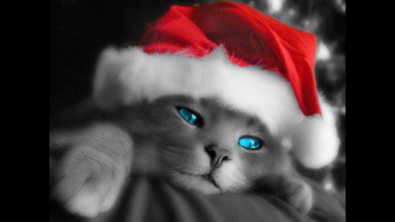 Frohe Weihnachten Georgisch.Merry Christmas Fröhliche Weihnachten 2014