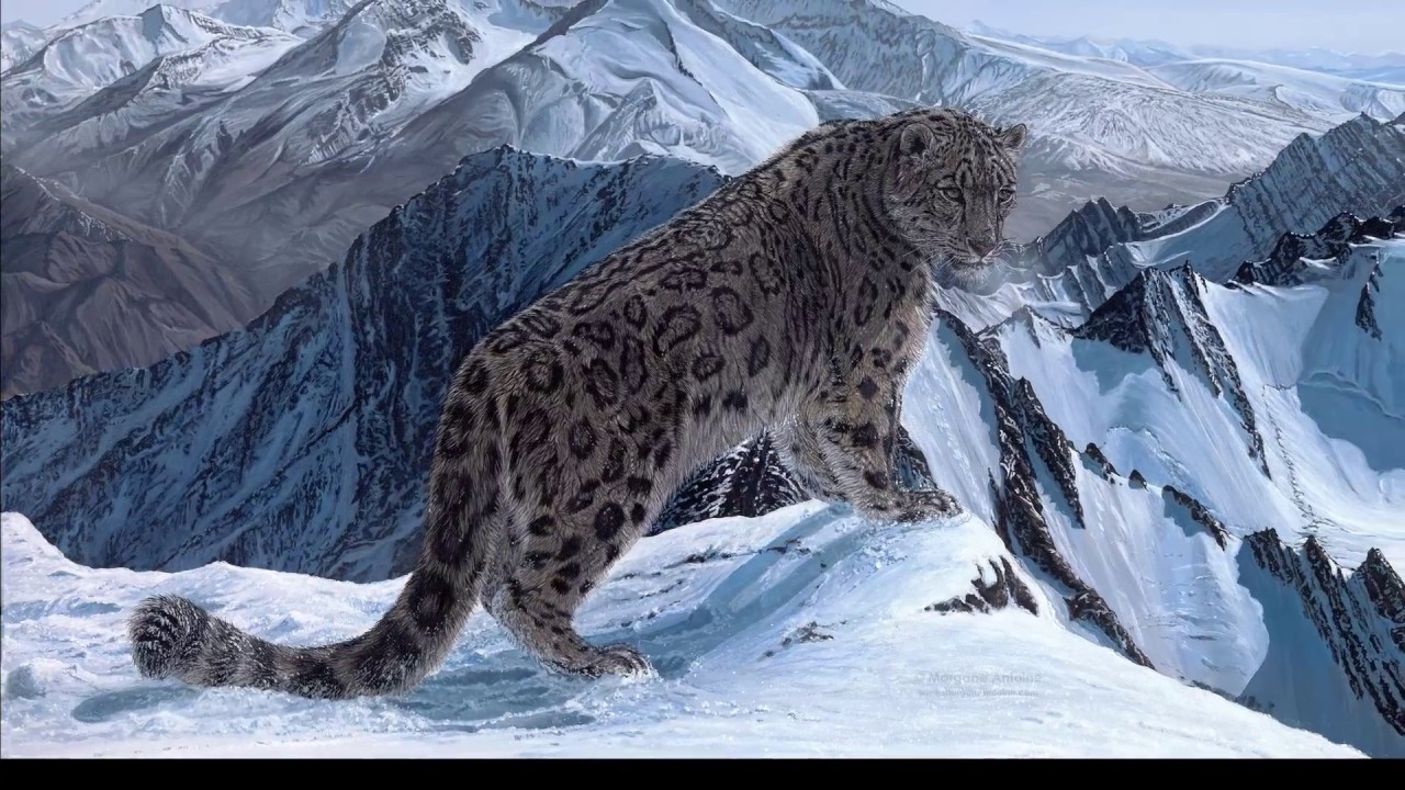 Quot Roof Of The World Quot Snow Leopard Acrylic Painting Step By