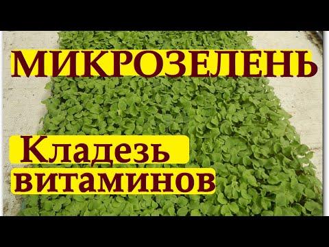 183_Микрозелень. Выращивание. От и до…