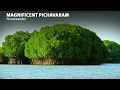 Pichavaram - Mangrove forest in Tamilnadu | Planetwander