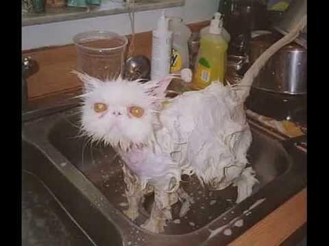 Кошки и котята,Очень смешные фото/ Cats and kittens