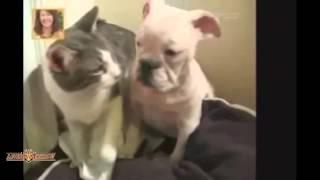 Коты атакуют собак!