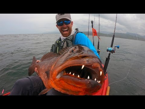 Giant Snapper with HUGE Teeth  | Field Trips Panama