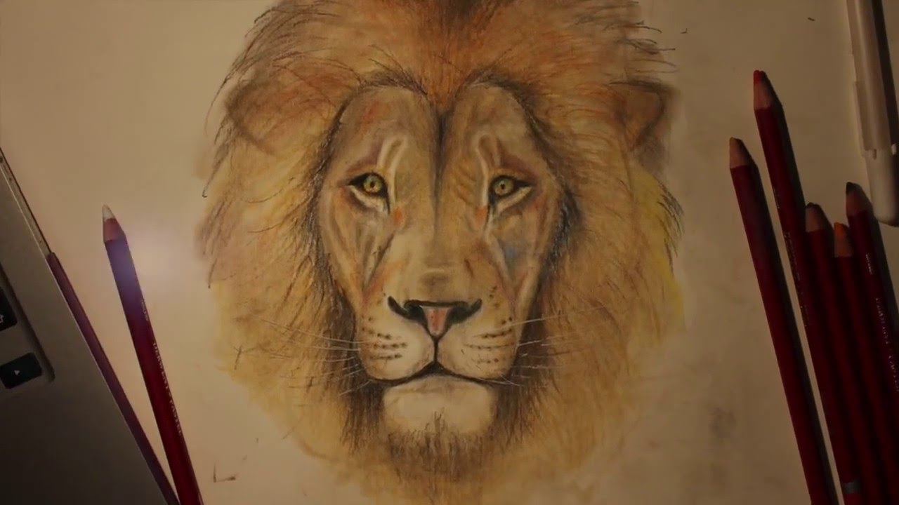 time lapse of a lion pastel pencil drawing youtube
