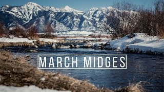 March Midges