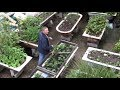 How this Guy Grows Organic Vegetables in Over 25 Bathtubs!