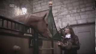 Salon du Cheval 2013 - Les chevaux arabes