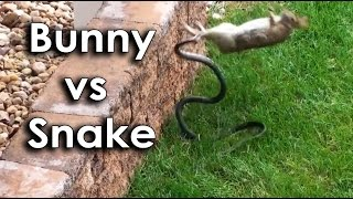 Ozzy Man & Mozza Commentate a Bunny vs Snake