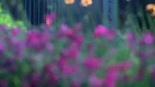 Летние зарисовки.(Летние зарисовки.Летние цветы, разнообразие, красивые цветы, природа, все о цветах, красивая пртрода, сила..., 2014-08-25T19:21:51.000Z)