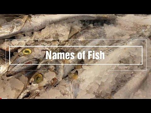 Tagalog| Learn Names Of Fish In Tagalog