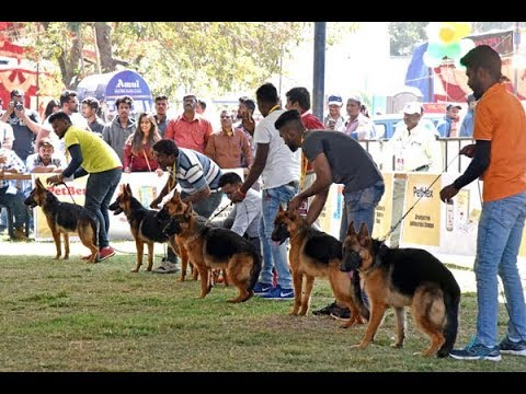 All India Championship Dog show  in Bengaluru