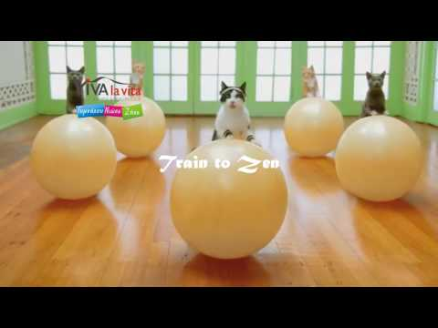 VIVA LA VITA Workout Group Classes Teaser