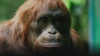 Woodworking Orangutan