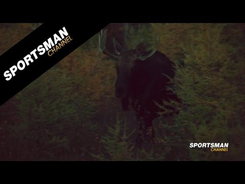12 Yard Shot on a Bull Moose
