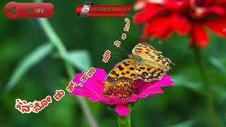 Neene madalu songs lyrics video in Kannada|