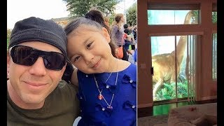 Dad uses projectors to surprised daughter with backyard dinosaurs - 247 news