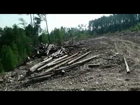Тайшетский лесхоз с нарушениями рубил всё подряд