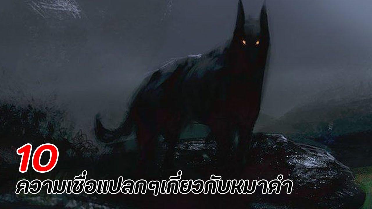 5 ความเชื่อแปลกๆเกี่ยวกับหมาดำ !!!