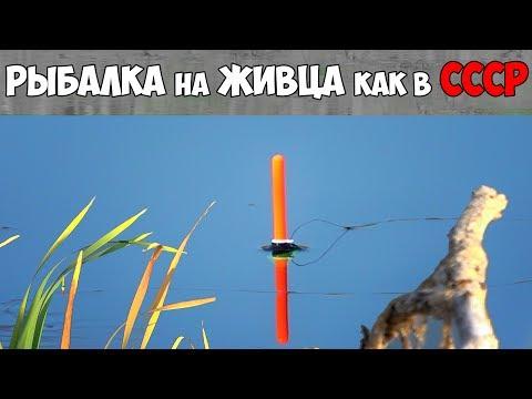 РЫБАЛКА на ЖИВЦА с ПОПЛАВОЧНОЙ УДОЧКОЙ как в СССР ✔ КАК ЛОВИТЬ ОКУНЯ и ЩУКУ на ЖИВЦА