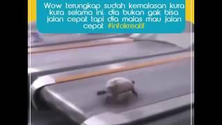 #siapa bilang kura kura jlan lambat
