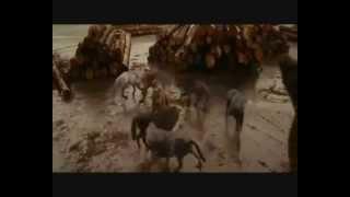 GÖKBÖRÜ - Şaman Davulu / Kam Davulu