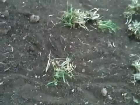 C mo plantar pasto en el jard n doovi - Como plantar cesped en el jardin ...