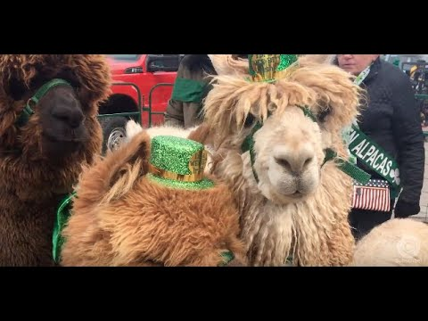 Cleveland St. Patrick's Day 2018: All the cutest pets, kids and costumes at the parade (video)