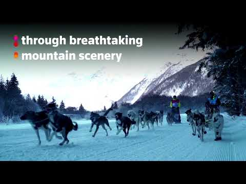 A dog sled race in the French Alps