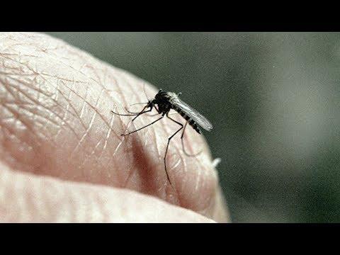 Вопрос: Могут ли комары ходить?