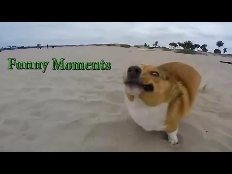 Epic Dogs Fail Compilation [HD]