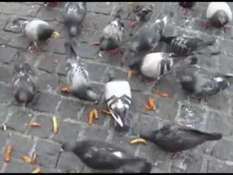 Pigeons on Dam Square Amsterdam 2009