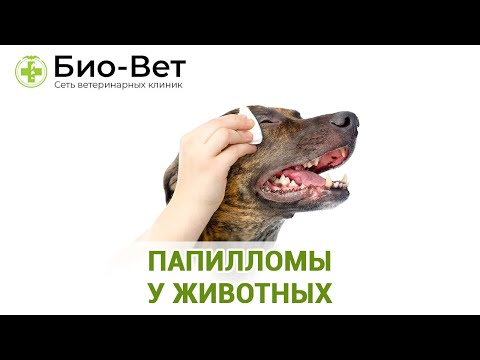 Папилломы у животных. Ветеринарная клиника Био-Вет.