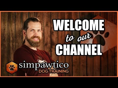 welcome-to-the-simpawtico-dog-training-youtube-channel!