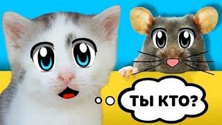 ДАЙ ИМЯ МЫШКЕ! КОТ МАЛЫШ и КОШЕЧКА МУРКА и МОЙ НОВЫЙ ПИТОМЕЦ! СМЕШНАЯ РЕАКЦИЯ ЙОРКА ПУПСИ! Mouse cat