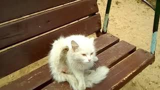 Кот лижет себе яйца!!!!!!)))))