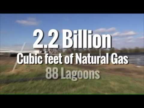Turning Waste from Pig Farms into Natural Gas
