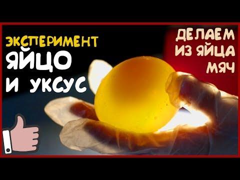 ЯЙЦО и УКСУС.  Как превратить яйцо в резиновый мяч