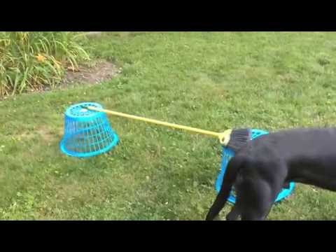 My Backyard Agility Course Using Household Products