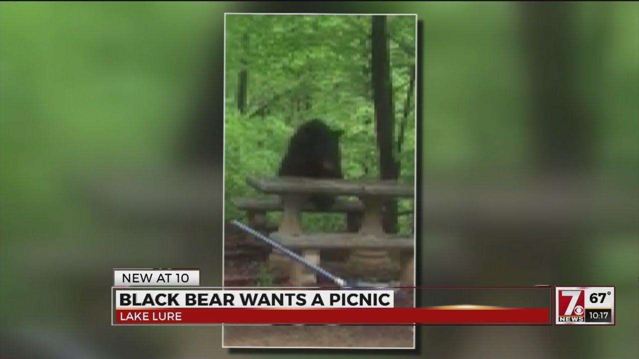 Watch: Bear Sits Like A Human At Familyu0027s Picnic Table   UPI.com