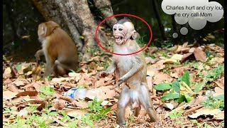 OMG Big male monkey attack bite baby monkey Charles,Charles cry loudly call Mom