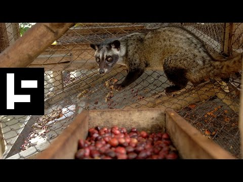 Kopi Luwak: Coffee beans that are pooped from a Cat.