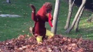Is that Tom Brady in a turkey suit?